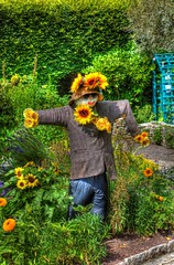 A sunflower scarecrow (Chris Atkins65) Tags: jurassiccoast corfe dorset sunflowers flowers scarecrow