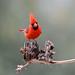 Face-to-face With a Cardinal
