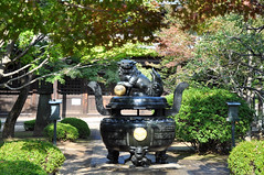 At Gōtokuji (DameBoudicca) Tags: tokyo tokio 東京 japan nippon nihon 日本 japón japon giappone 世田谷 setagaya gōtokuji gotokuji 豪徳寺 buddhisttemple buddhisttempel templosbudistas templesbouddhistes 寺 temple tempel tempio templo buddhism buddhismus budismo bouddhisme buddhismo 仏教 incenseburner censer duftrauchbrenner pebetero 香炉