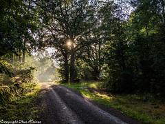 Smaland 082019 01 (U. Heinze) Tags: schweden sverige sweden smaland nature natur himmel olympus omd em1markii 12100mm