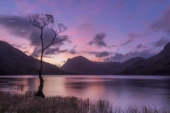 Lone Tree Buttermere (michael301187) Tags: canon 1635mm landscape lake district nature sky sunset 5d landmark photo photograph island view uk great britain blue horizon long exposure shore wet gitzo benro cloudscape outdoor travel dramatic sun setting water cumbria england mountains valley tree boat mountainscape season seasonal tourism destination range idyllic perfect conditions ideal buttermere lone lonetreebuttermere pink pastel lakedistrict