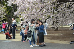 Japanese girls take selfies against another clump of sakura (cherry blossom) trees (shankar s.) Tags: eastasia japan landoftherisingsun nippon nihon shinjukugarden shinjukugyoen shinjukugyoennationalgarden publicpark publicgarden greenlung crowded touristspot chinesetourists walkingtrail sidewalk footpath treelined landscaping sakura cherryblossom cherryblossominbloom relaxing openground openfield openspace hanami cherryblossomviewing fallensakurapetals posing selfie prunusserrulata
