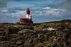 Lighthouse (lancscacher) Tags: farneislands lighthouse northumberland sealion seashore seal sonyrx100 sony