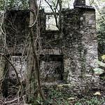 Llwyn Hir forest ruins