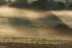 19082019-DSC_0033 (vidjanma) Tags: taverneux arbres bocage brume cloture rayons