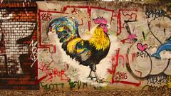 bln | hahn (stoha) Tags: barutherstr unguessbar berlin berlino hahn gallo xberg berlinkreuzberg streetart mural bird vogel kunst art friedhof mauer wall cemetry cimitero muro kreuzberg61