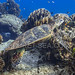 Sea Turtle on Surin Islands    IMG_2088b2s