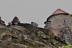 Cēsis Medieval castle (veebruar) Tags: trip summer cesis latvia bears medieval castle