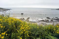 Flowery Shore (Bas Tempelman) Tags: wales water sea gower peninsula port eynon flowers yellow grass bristol channel cliffs kodak gold 200 nikon f801s