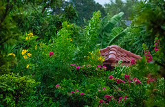 Rainy Day In Bangkok (hasneyhassan) Tags: canon rainyday raindrops nature naturalbeauty greenery flowers trees rain canon1dmarkiv canon70200mmf4l minburi bangkok thailand