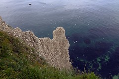 Bempton cliffs (Sarahjoy_l) Tags: bemptoncliffs england yorkshire beach coast marinelife seabirds bird birds gannet guillemot razorbill flamborough northsea wildlife canon7d britishwildlife