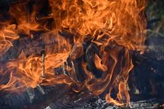DSC_0395 (griecocathy) Tags: macro feu flamme bois braise vis jaune gris noir crème oranger