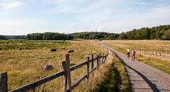 Country road (P. Burtu) Tags: sweden sverige landskap landscape natur nature sommar summer cow kor skog forest väg landsbygd landsväg uppland djur animal