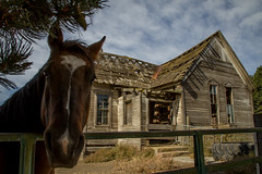 A Horse at Church (RJR.Photography) Tags: whitmancounty