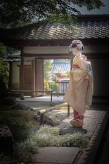 Maiko_20190526_121_5 (Maiko & Geiko) Tags: 20190526 eishoin temple kanohisa kyoto maiko 舞妓 栄摂院 叶久 京都 叶家 kanoya ksumika