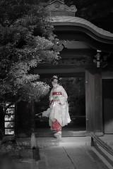 Maiko_20190526_121_14 (Maiko & Geiko) Tags: 20190526 eishoin temple kanohisa kyoto maiko 舞妓 栄摂院 叶久 京都 叶家 kanoya ksumika