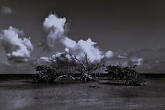 Braving it alone (Rupam Das) Tags: nikon nikkor 24120mm monochrome blackandwhite bw water sky clouds travel turkandcaicosislands explore travelogue ocean alone solitary nature scenic grandturk