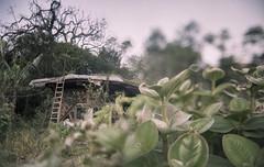 Dos mundos por vir (Tuane Eggers) Tags: mundos universos por vir bioconstrução plantas vida maquiné 35mm film tuaneeggers
