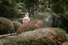 Maiko_20190526_121_11 (Maiko & Geiko) Tags: 20190526 eishoin temple kanohisa kyoto maiko 舞妓 栄摂院 叶久 京都 叶家 kanoya ksumika
