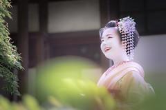 Maiko_20190526_121_25 (Maiko & Geiko) Tags: 20190526 eishoin temple kanohisa kyoto maiko 舞妓 栄摂院 叶久 京都 叶家 kanoya ksumika