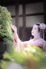Maiko_20190526_121_30 (Maiko & Geiko) Tags: 20190526 eishoin temple kanohisa kyoto maiko 舞妓 栄摂院 叶久 京都 叶家 kanoya ksumika