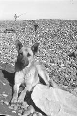 36 (mati.a) Tags: nikon fm2 nikonfm2 ilford bw hp5 ilfordhp5 chile film 35mm analog dog perro playa beach pescador fisherman