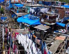 Dhobi Ghat, Mumbai (stewardsonjp1) Tags: drying clothes laundry workers washing india mumbai ghat dhobi
