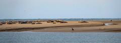 Always roll off nicely (Zoom58.9) Tags: ocean water dunes sand animals outside seascape nature europe germany borkum meer wasser dünen tiere draussen seelandschaft natur europa deutschland sonydscrx10m4