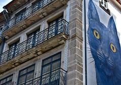 Staring cat in Porto (diegocarreraperez) Tags: cat gato graffiti mural wall building edificio pared spray pintura painting chien porto oporto portugal europe europa portuguese street calle city ciudad urban urbano art arte idea blue balcony balcón stone piedra brick ladrillo