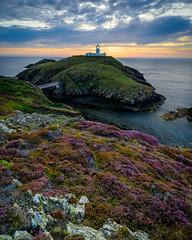Strumble Head & Heather (Explored...) (Joe Hayhurst) Tags: landscape pembrokeshire wales stumbles lighthouse heather