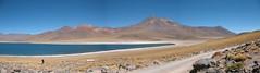 CHILE 2010-2011 - Lagunas Altiplanicas (Julio Herrera Ibanez) Tags: chilenorte nortegrande altiplano lagunasaltiplanicas cordilleradelosandes