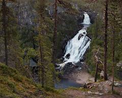 Muddus Nationalpark III (Gustaf_E) Tags: forest kväll landscape landskap laponia lappland muddus muddusnationalpark muttos nationalpark norrland skog sommar sverige sweden urskog woods