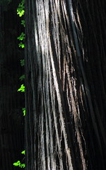 Littles by Little (Eye of Brice Retailleau) Tags: photographe no filter francais parisien adventure parisian photographer travel traveler photography photographie french voyage visit voyageur angle home tour brice retailleau quintessence de voisinage bright website backpack life backpacker beauty best composition perspective pure light colorful colourful couleurs scenic trip du monde around world earth wonderful beautiful gorgeous amazing journey destination tourisme tourism backpacking texture pattern lines colors colours couleur nature natural sunlight tree trees forest redwood national park sequoia california usa america roadtrip
