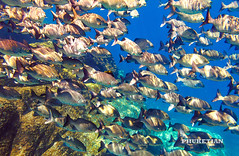 Surin and Similan archipelago, yacht cruise and underwater photos