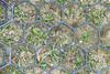 Hexagonal soil retention mat (wwimble) Tags: hexagons hexagonal grass soilretention mat grid island dawesarboretum