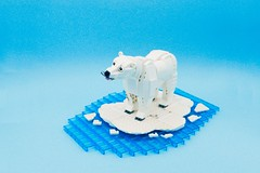 The Beauty Of Arctic Circle. (vincentkiew) Tags: bear baby fish snow love ice nature lego arctic polarbear change polar kin climate warming global ocean circle