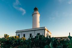 Far de la Mola (Nicola Pezzoli) Tags: formentera isola island spain sea mediterraneo mare holiday vacanze baleari baleares nature natura lighthouse faro mola sunset light sun cactus sky blue