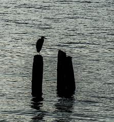 Morning Portrait. (Omygodtom) Tags: portrait river natural usgs outside water black am algorithm