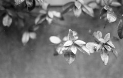 190713_NikonFG20_008 (Matsui Hiroyuki) Tags: nikonfg20 nikonainikkor85mmf20