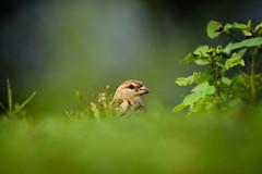 Bird (sahulalit) Tags: bird animal wildlife outdoors nature no people tree one perching day closeup animals in the wild beak branch shrike