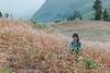 _MG_4159.1009.Xín Mần.Hà Giang (hoanglongphoto) Tags: asia vietnam northvietnam northernvietnam northeastvietnam dailylife people girl children hmonggirl thehmong h mongpeople flower fashion cute hmongchildren canon canoneos5dmarkii canonef2470mmf28lusm đôngbắc hàgiang xínmần cuộcsống đờithường trẻem trẻemhmông hoa hoatamgiámạch côbé côbéhmông