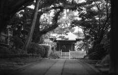 190713_NikonFG20_007 (Matsui Hiroyuki) Tags: nikonfg20 nikonainikkor85mmf20