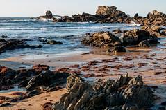 Playa con ocle (ccc.39) Tags: asturias gozón verdicio carniciega playa mar cantábrico costa arena ocle algas rocas orilla sea coast beach rocks seaweed