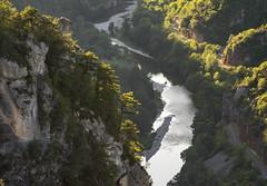 Gorges du Tarn (penelope64) Tags: lozère cévennes france nature olympusem1 olympus75300f4867ii paysage gorgesdutarn