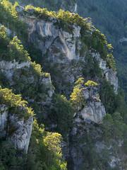 Gorges du Tarn (penelope64) Tags: lozère cévennes france nature olympusem1 olympus35100f2 paysage gorgesdutarn