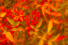 PAINTING PARQUE DEL BUÉN RETIRO-Madrid (FRANCISCO DE BORJA SÁNCHEZ OSSORIO) Tags: painting passion photo pasión primavera photostreet park parquedelretiro parquedelbuenretiro españa exposure enfoque encuadre exposicion madrid moment shot spring summer streetphoto street love light luz life lovely verano vida view instant instante invierno winter flechazo focus focuspoint foco framing nature naturaleza nice color colour composition composición colourtemperature bokeh beauty belleza detalle detalles detail details desenfoque disparo divertido delicado delicate dof depthoffield
