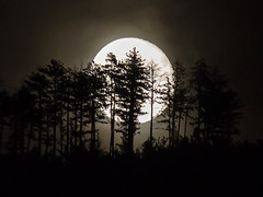 lever de lune (penelope64) Tags: lozère cévennes france nature olympusem1 olympus35100f2 lune moon