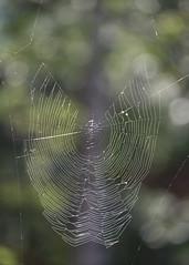 Defi14-img4 (Tonton Dave) Tags: toile araignée spider web bokeh