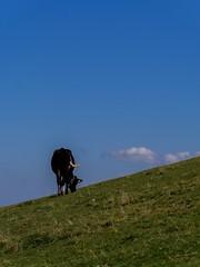 Entre ciel et terre en pays Fribourgeois (EP61) Tags: ep61 quiétude paix montagne fribourg vache labera