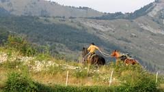 Randonnée équestre dans les Quatre Cantons (bernard.bonifassi) Tags: 5000000vues bb088 06 alpesmaritimes thiery 2019 août été counteadenissa canonpowershotsx60hs randonnée equestre cheval